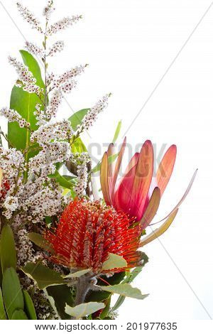 Banksia And Protea Flowers Against White Background