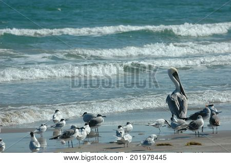 A mixed group of sea birds on the beach at Padre Island National Seashore.