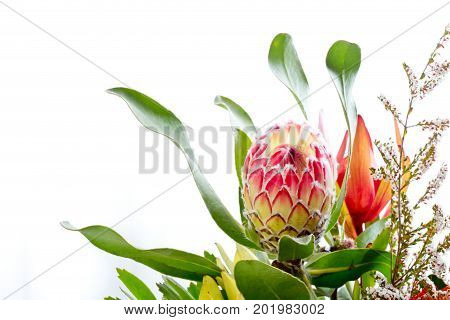 Pink And Yellow Protea Flower Against White Background With Copy Space