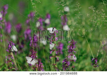 White Butterfly On A Purple Flower