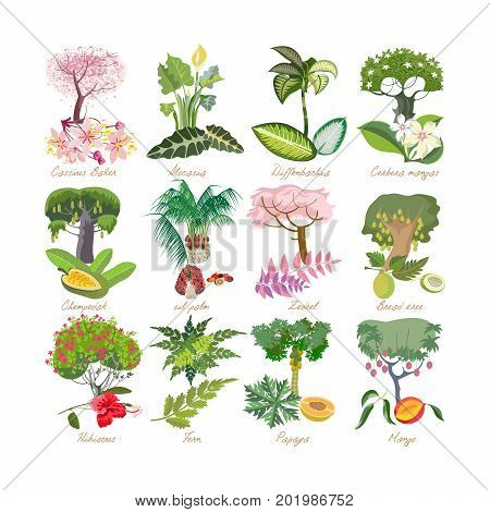 Set of tropical palm plants with leaves, flowers: alocasia, cassia baker, diffenbachia, cerbera mangas, oil palm, hibiscus, fern, zedrel, breadfruit papaya mango Vector illustration isolated