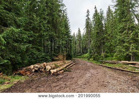 Abusive Wood Cutting