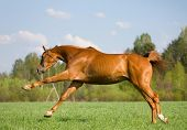 game of chestnut horse in field poster