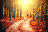 Autumn, Fall scene. Beautiful Autumnal park with pathway. Beauty nature scene. Autumn landscape, Trees and Leaves, forest with bright leaves on trees and bright sun. poster