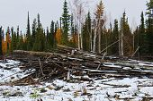 Slash piles left after clear cutting a logging area poster