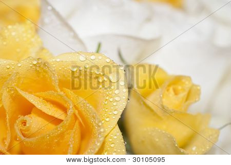 Yellow and white roses with water drops