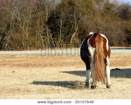 A Shy Pony