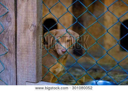 An ordinary brown puppy of a domestic dog sits behind a cage in a kennel. poster