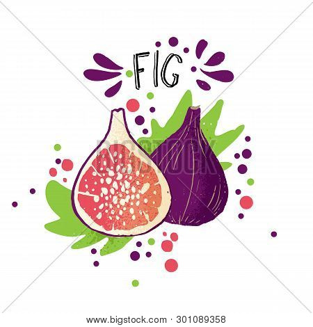Vector Hand Draw Colored Fig Illustration. Purple, Blue Peach With Pulp And Fruit Bones And Green Le