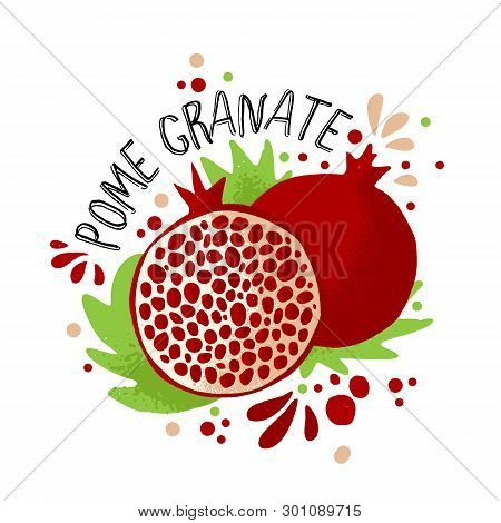 Vector Hand Draw Colored Pomegranate Illustration. Purple, Red Pomegranates With Pulp And Fruit Bone