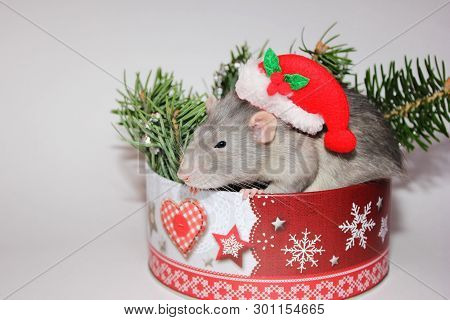 ae5d6b6469b7a Gray Rat Sitting Among The Christmas Decorations. New Year 2020. Symbol Of  The Year