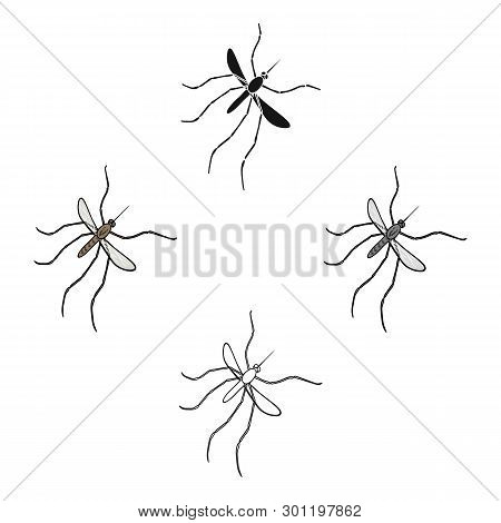 Mosquito, Dipterous Insect. Bloodsucking Insect, Mosquito Single Icon In Cartoon, Black Style Vector