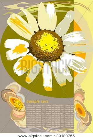 Camomile - sample