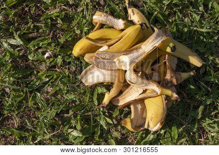 A Pile Of Bananas