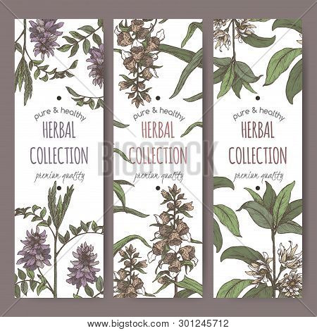 Three Color Labels With Star Anise Or Badiane, Liquorice And Digitalis Lanata Aka Woolly Foxglove Sk