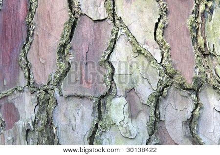 Bark background