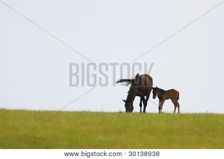 Malé koně a jeho matka