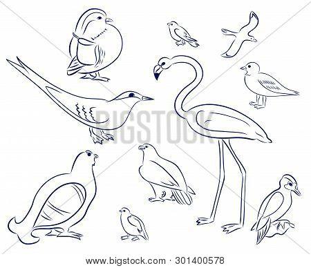 Birds Cartoon Set. Flamingo, Gull, Duck, Woodpecker, Black Grouse, Eagle, Pigeon, Sparrow, Tern. Han