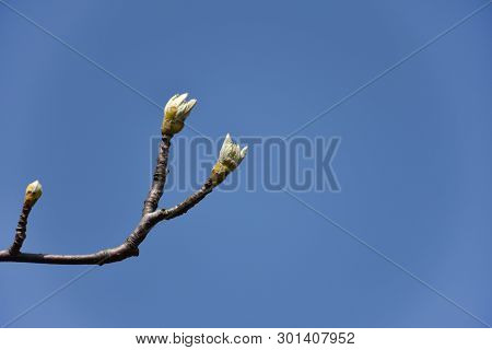 Springtime With New Tree Sprouts Against A Cloudless Blue Sky
