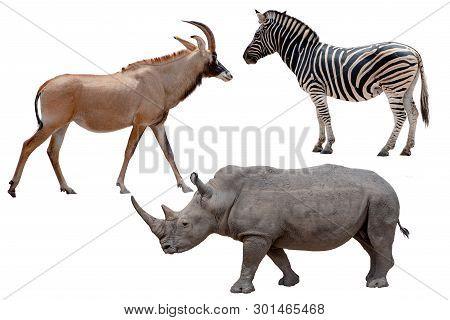Three African Wild Animals - Antelope,zebra And Rhinoceros ,isolated On White