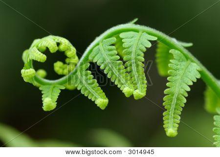 Exotic Ferns
