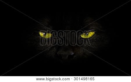 Close Up Of Black Cat With Yellow Eyes On Black Background. Horror Atmospheres And Halloween Concept