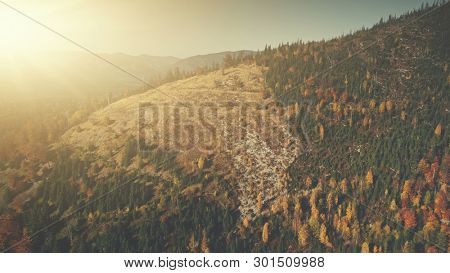 Highland Deforestation Soft Sun Beam Aerial View. Wildlife Mountain Slope Surface Hill Meadow Sight. Coniferous Forest District Fir Tree Wood Cut Down Ecology Concept Drone Flight