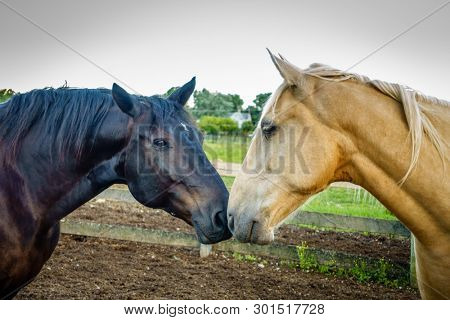 Closeup of two horses rubbing noses on a farm in Kentucky