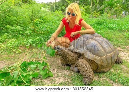 Caucasian Tourist Woman In Red Dressed Feeding Aldabra Giant Tortoise, Aldabrachelys Gigantea, A Tor