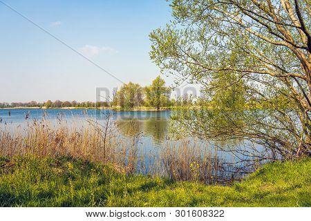 Budding Willow Shrub In The Foreground At The Edge Of A Dutch Lake In The Spring Season. The Photo W