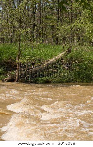 Rushing Water In Small Stream