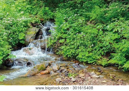 Wild Stream With Cascades In The Forest Shade. Beautiful Summer Nature Scenery. Bottom Of The Creek