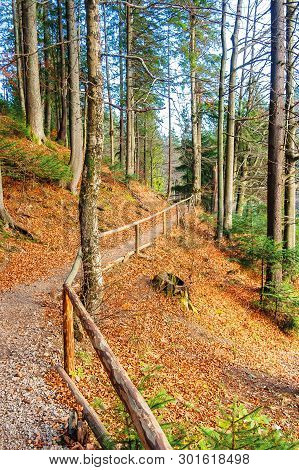 Footpath Through Autumn Forest In Late Autumn. Wooden Fence Along The Edge. Beautiful Nature Backgro