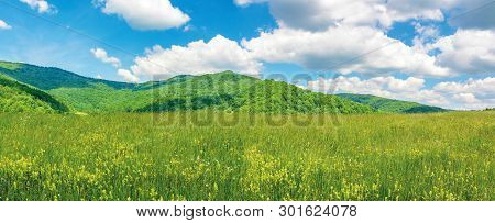 Panoramic Summer Countryside In Mountains. Wonderful Sunny Day Scenery. Grassy Rural Fields And Mead