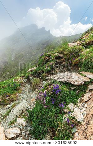 Flora Of The Fagaras Mountain. Flowers Among The Grass On The Edge Of A Steep Rocky Slope. Foggy Wea