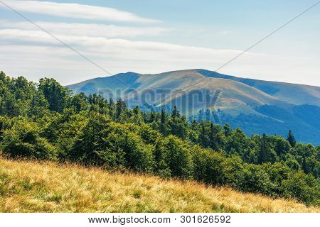 Carpathian Sub Alpine Meadows In August. Beautiful Mountain Landscape. Primeval Beech Forest On The