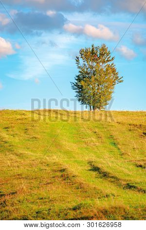 Lonely Tree On The Hillside In Warm Evening Light. Beautiful Countryside Scenery At Sunset. Weathere