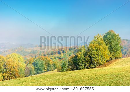 Early Autumn Countryside Scenery In Foggy Weather. Beech Trees In Colorful Foliage On The Grassy Hil