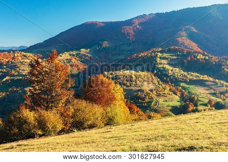 Wonderful Autumn Afternoon In Mountains. Beautiful Countryside Scenery With Trees In Red Foliage On