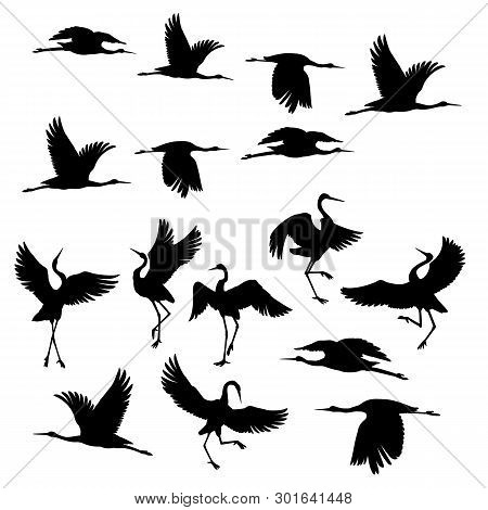 Silhouette Or Black Ink Icons Of Crane Birds Or Herons Flying And Standing Set.