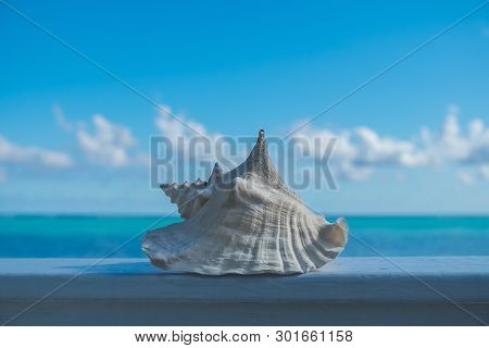 Conch Shell Whitened By The Sun On A Wooden Ramp In Front Of The Caribbean Sea In Little Cayman