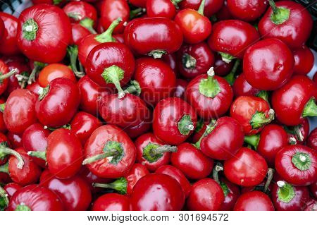 Fresh Cherry Ball Peppers, Pimento Or Red Sweet Chilli Peppers Sold At Market