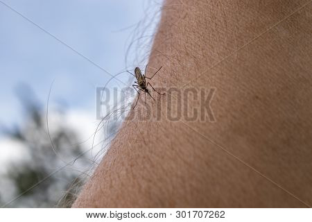 One Mosquito Sits On The Hand, Pierces The Skin And Sucks Human Blood. Causes The Disease Malaria. M