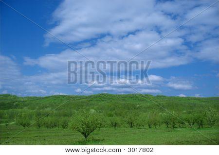 Apple Hills