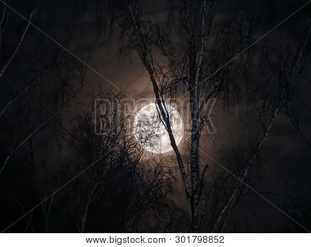 Mysterious Full Moon Behind The Bare Branches