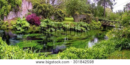 Lush Vegetetation Musk In River Water And Garden With Wooden Bridge Panoramic .
