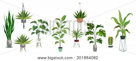 Pot Plant Set. Plants Plastic Decorative Container And Hanging Styling Indoor Basket For Potting Tre
