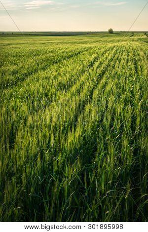 Sunset In Countryside Landscape.wheat Fields And Countryside Landscape. Nature Landscape. Sunset In