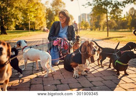 smiling woman walking a group of dogs and enjoying outdoors