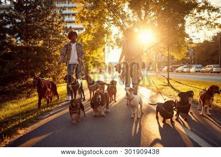 Dog walker at work. Couple dog walker walking with dogs in the park